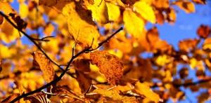 Jesień na polskiej działce od czego rozpocząć